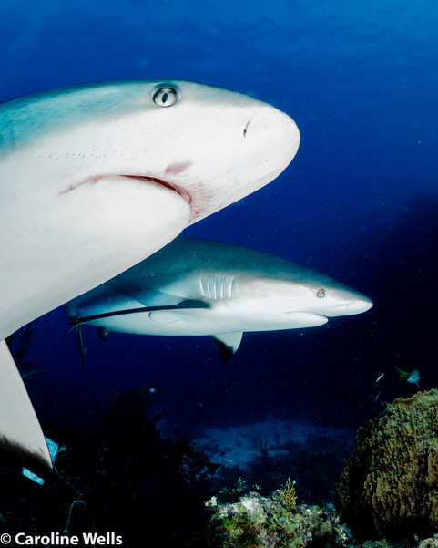 The power of the breath – calm amongst the sharks